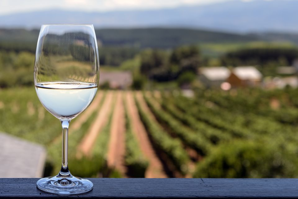 Glass of white wine with vineyards background; focus on glass