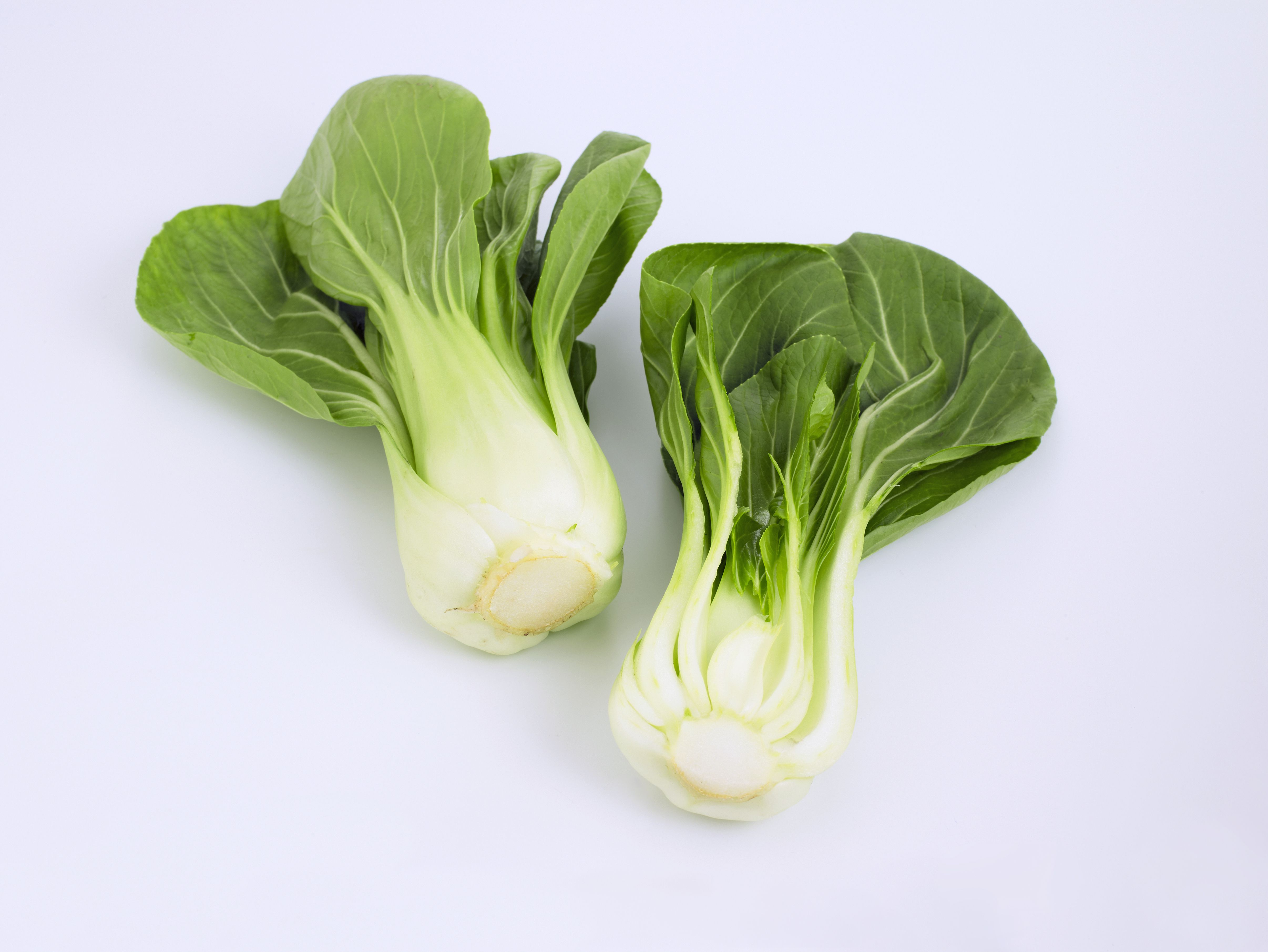 Chinese cabbage or Bok Choy (Brassica rapa)