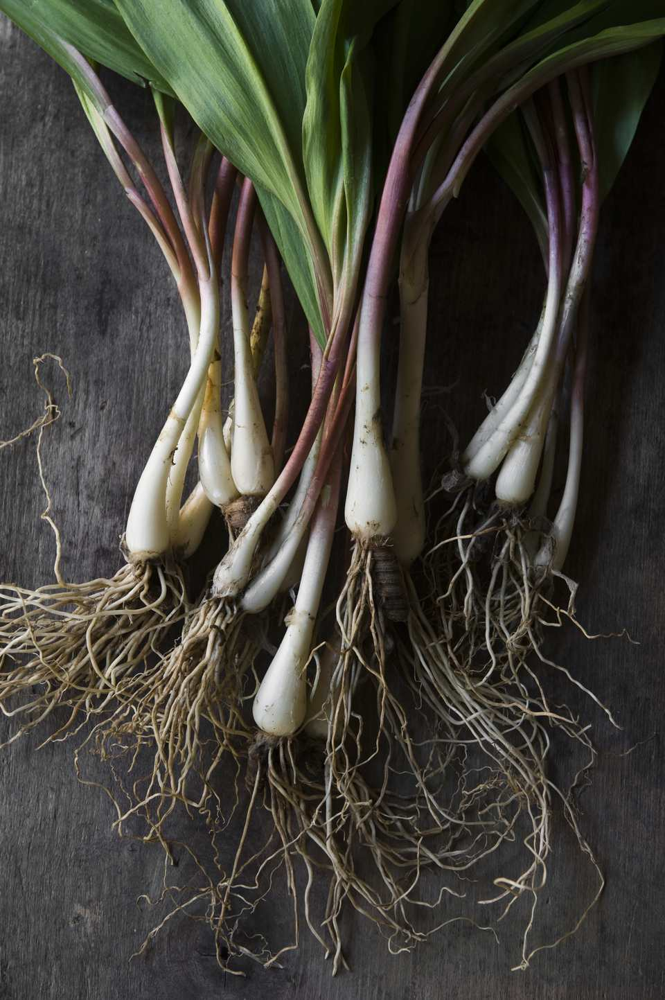 Wild Ramps on Farm Table