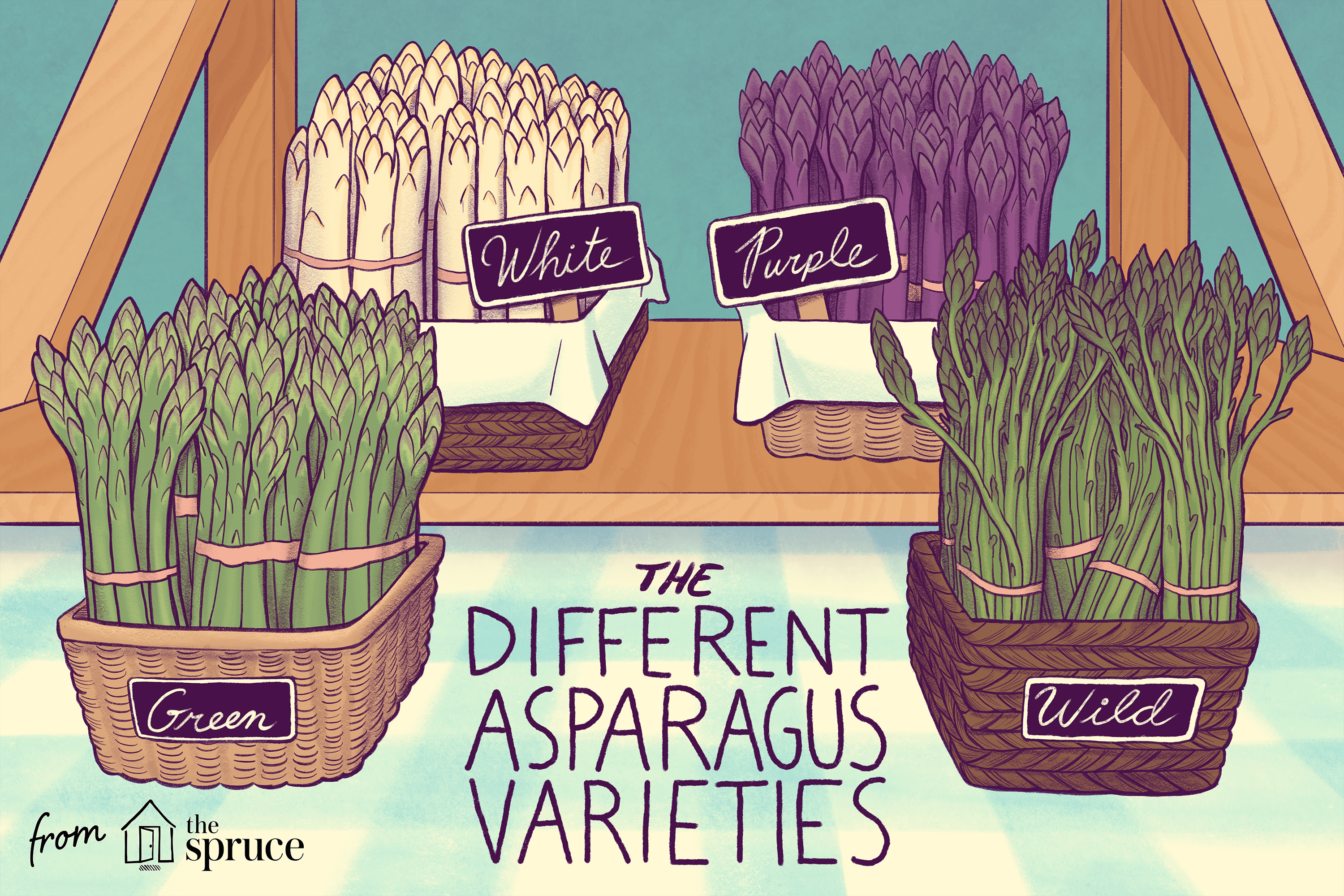the different asparagus varieties