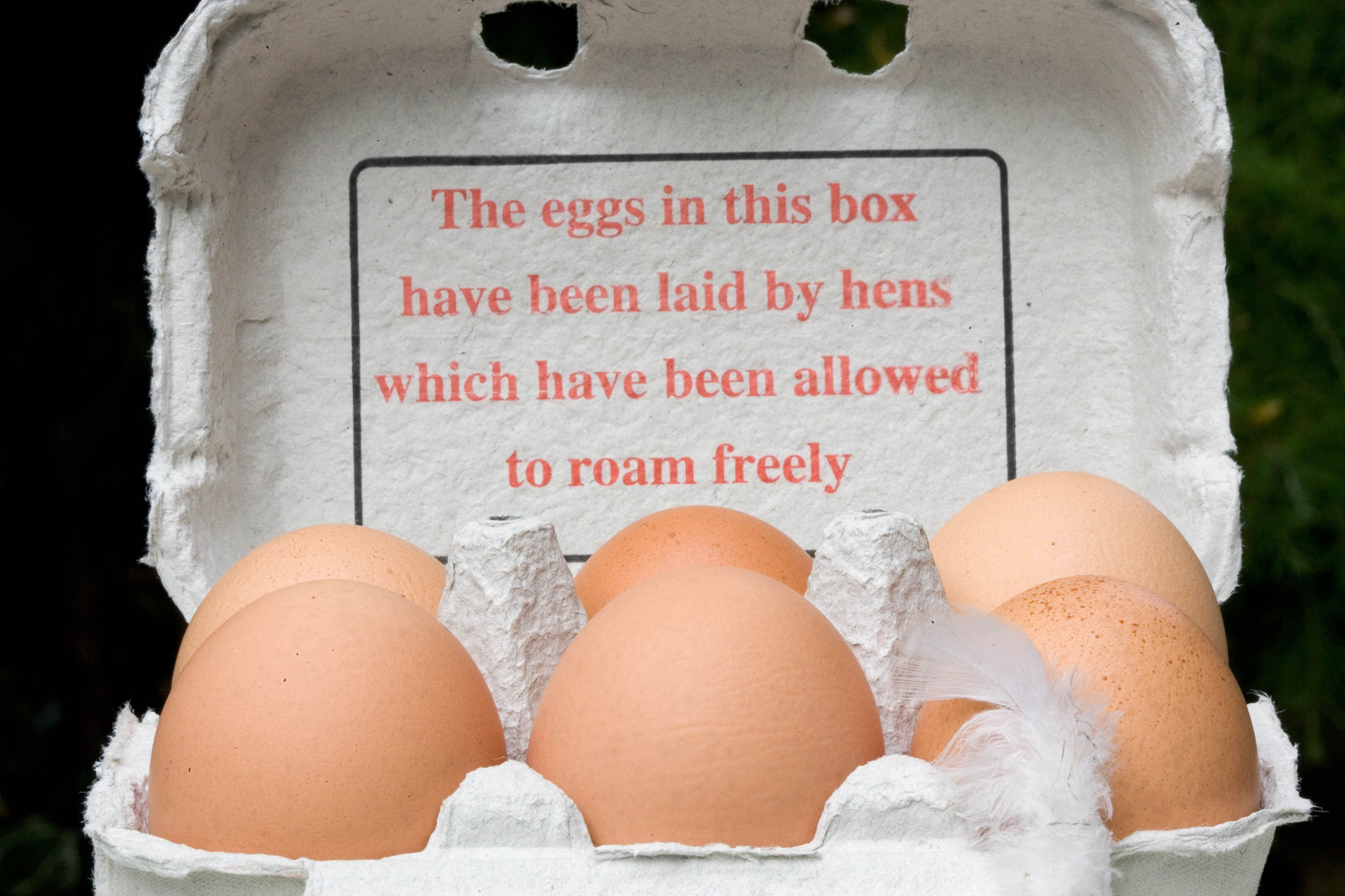 Free-range eggs in carton