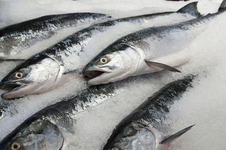 Choosing the Best Fresh or Frozen Salmon