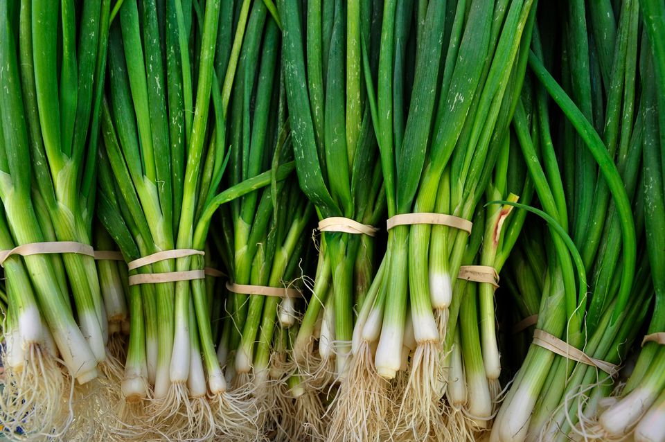 Close up of green onion bundles