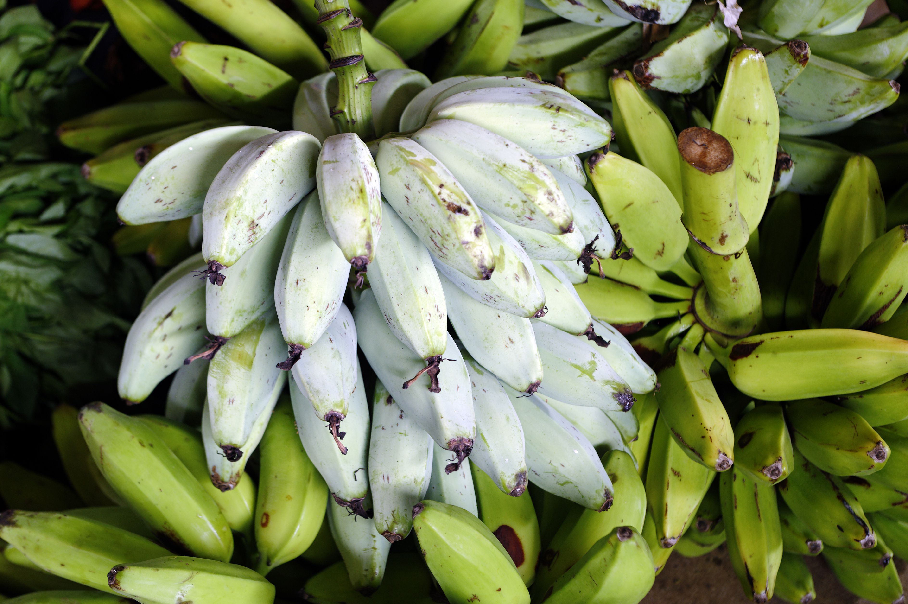 A Guide To Six Different Types Of Bananas