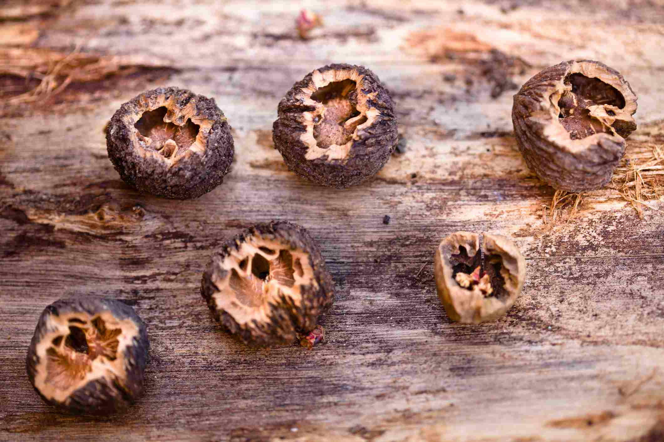 Cracked Black Walnuts