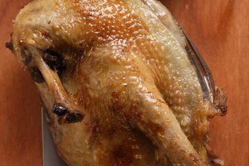 Roast pigeon, halved, on knife