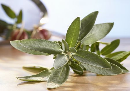 Sage History, Uses, and Recipes