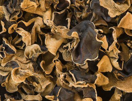 Close-up of cloud ear mushrooms