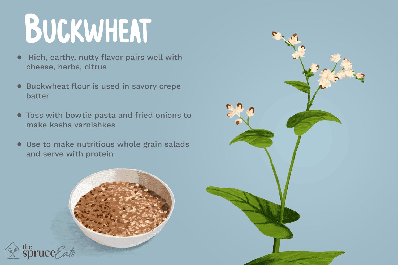 what is buckwheat