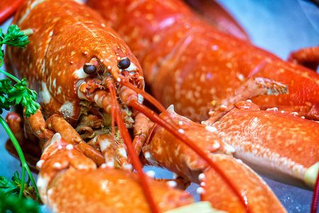 Lobster Lingo And Terminology