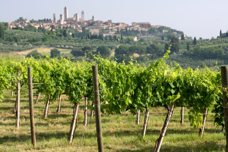 Italian Wine Guide for Beginners