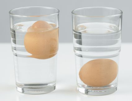 Testing eggs freshness in water