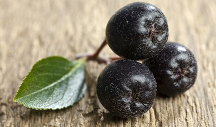 Aronia berries, close-up
