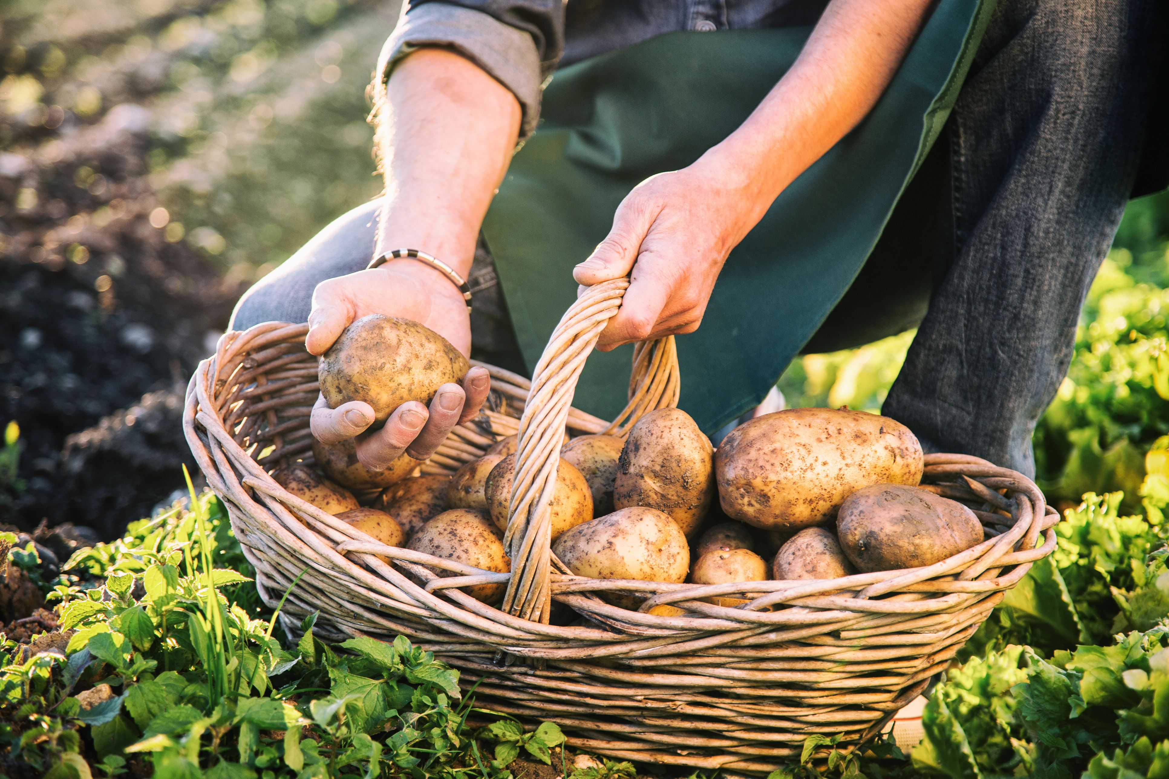 This Is the Best Way to Store Potatoes So They'll Stay Fresh for Weeks