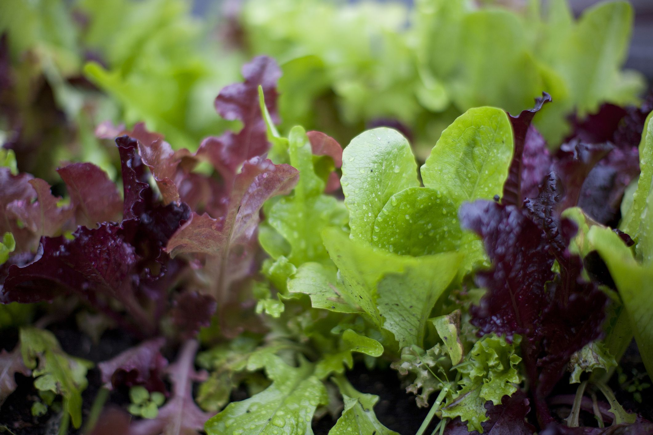 10 Tender Greens to Look for This Spring