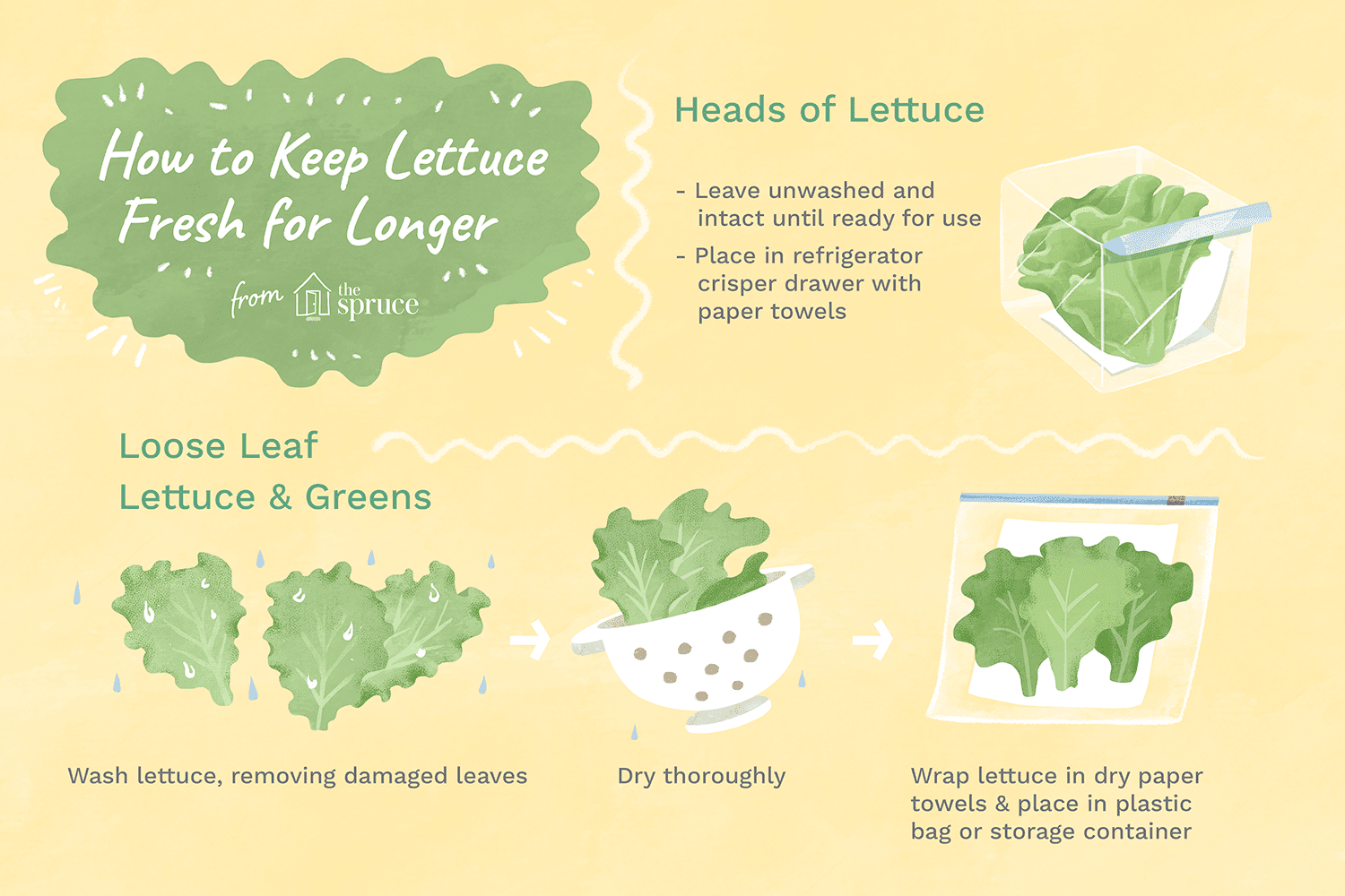 Illustration with details on how to keep lettuce fresh