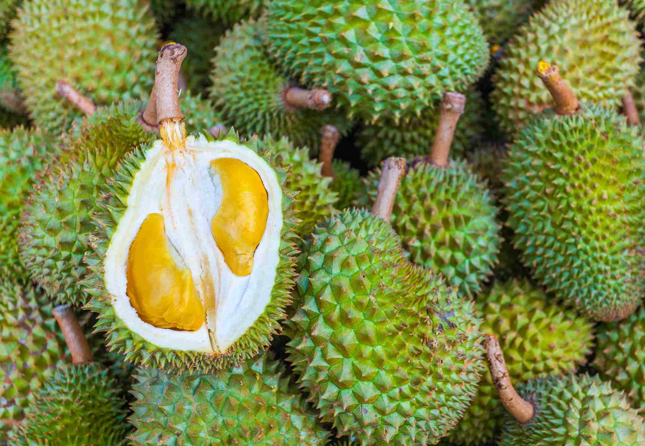 Several Durian, called the king of fruits, with one open.