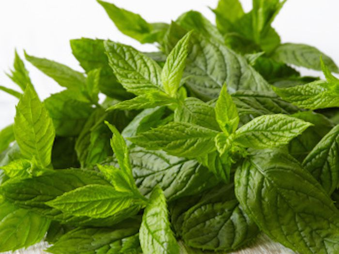 How to Grow and Dry Mint