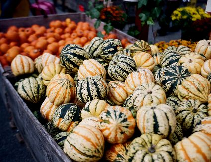 A vast stall of squashes