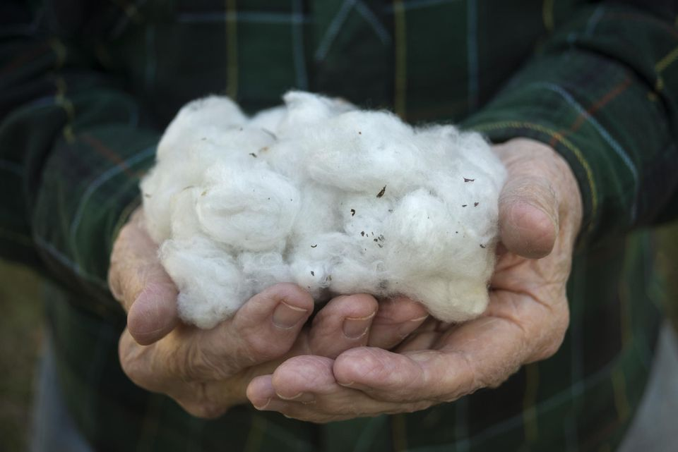 Cellulose is sometimes made from cotton