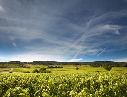 Bourgogne, France