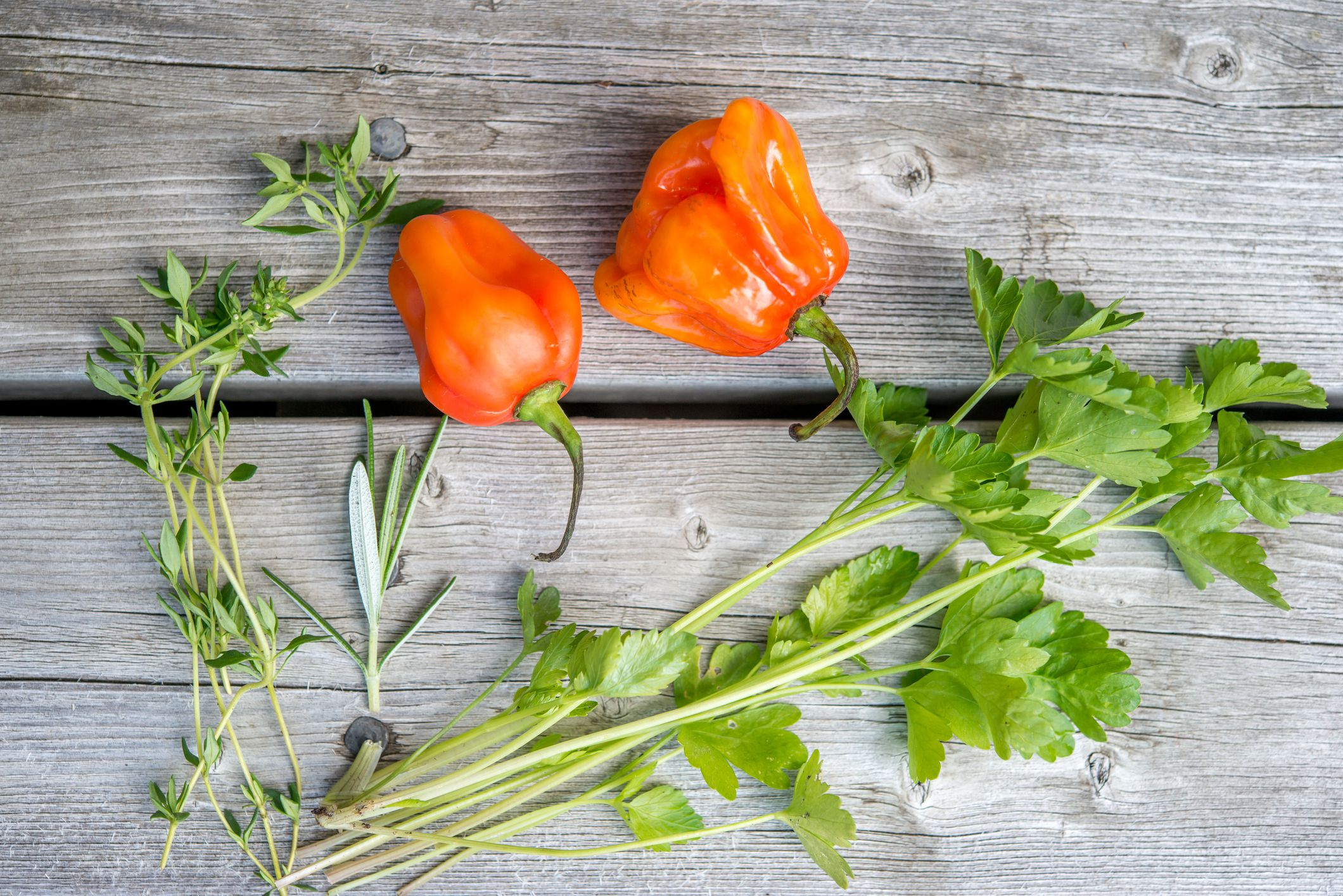 HOT JAMAICAN RED CHILLI PEPPER 15 SEEDS