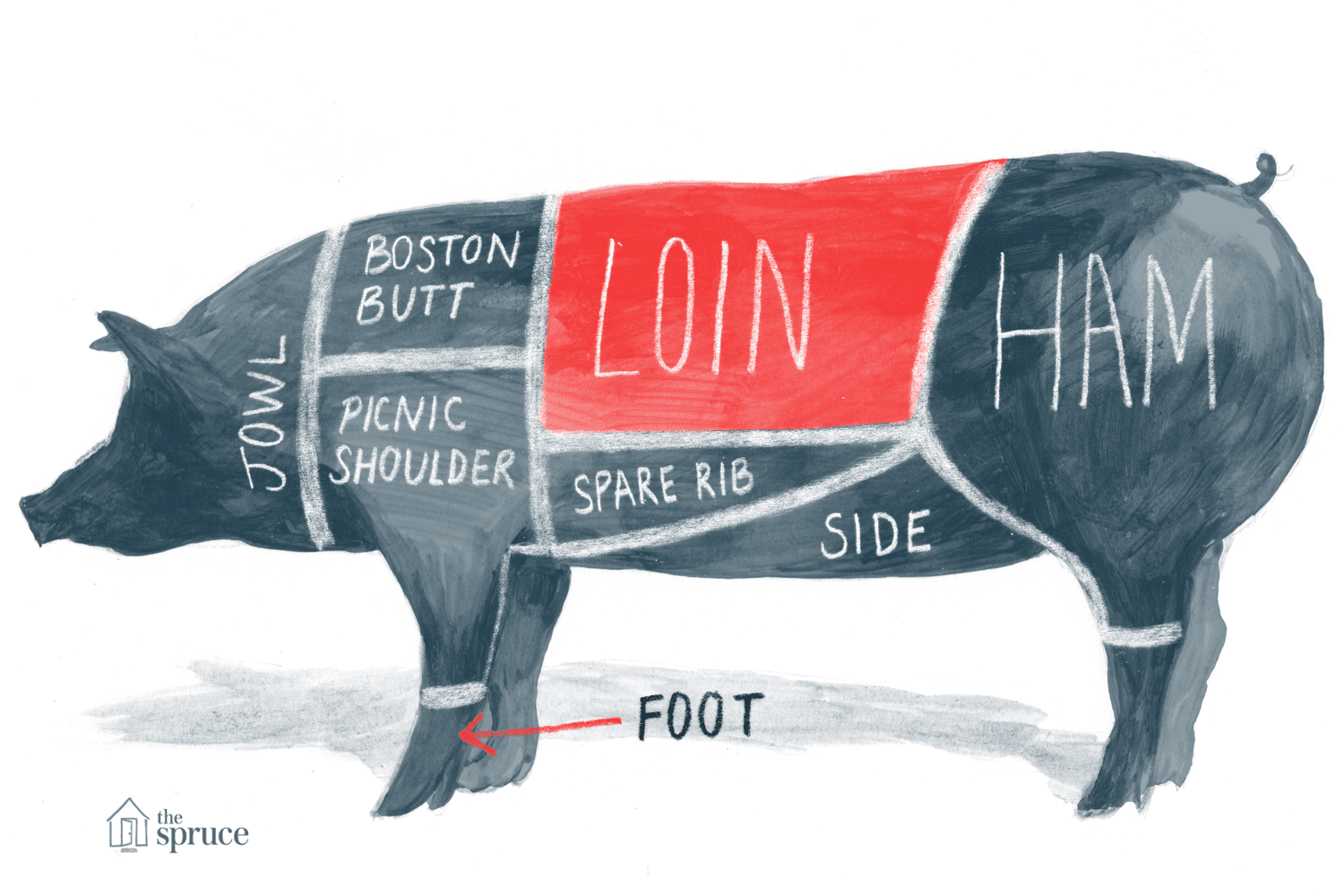 Illustrated diagram of the cuts of pork - highlighting the pork loin