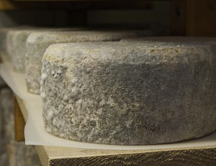 Cheese rounds on shelf