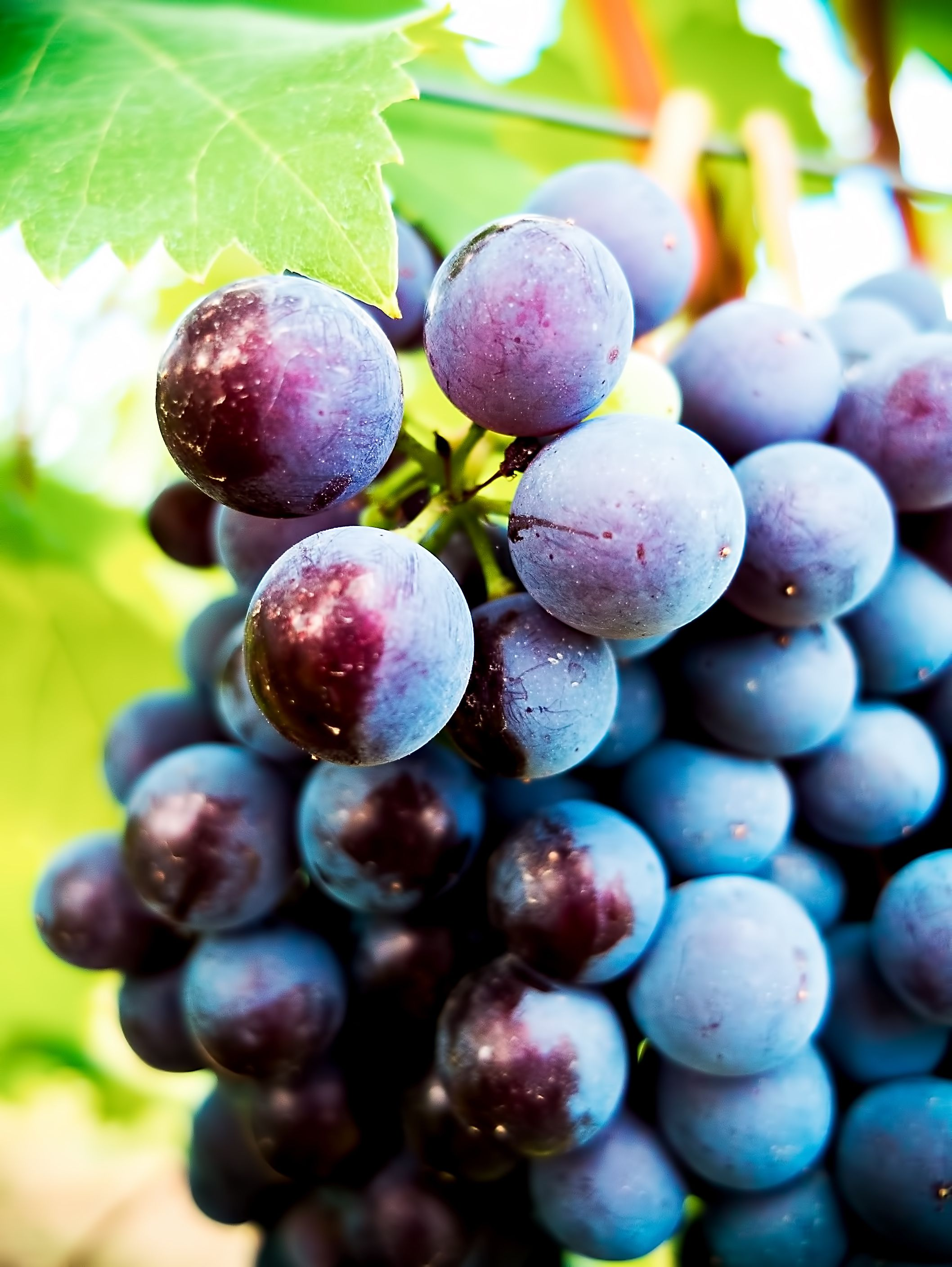The Top-Rated Sweet Red Wines in the World - Vinfolio Blog  |Best Rated Riesling Wines