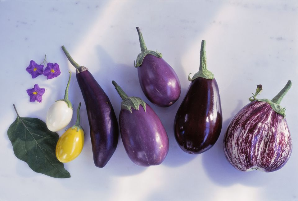 Different types of eggplants