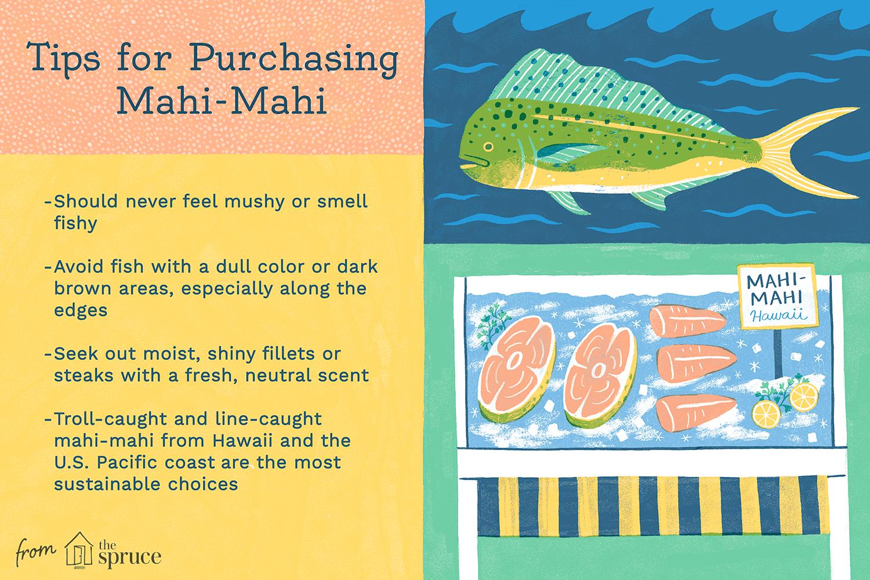 all about mahi mahi fish v1 1bc53e7918aa4ce991c45ffe4579daf1