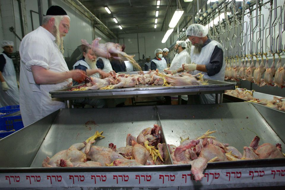 Chickens being cleaned and inspected in a Jerusalem poultry factory