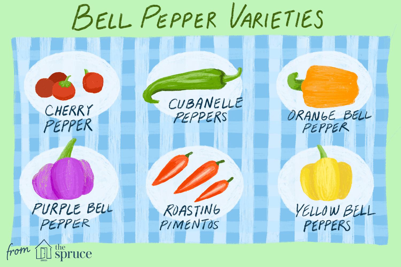 illustration featuring bell peper varietiesq