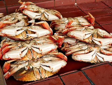 A stack of Dungeness crabs