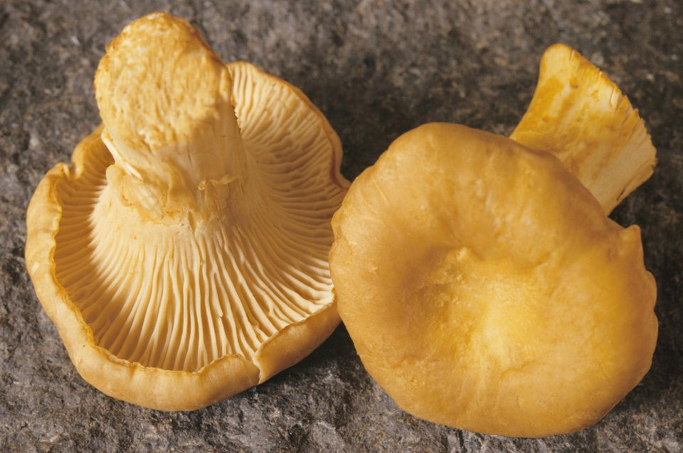 Chanterelle mushrooms (Cantharellus cibarius), close-up