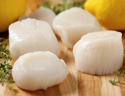 Fresh sea scallops