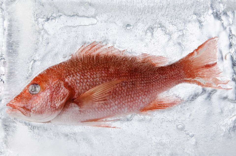 Frozen Fish in Ice
