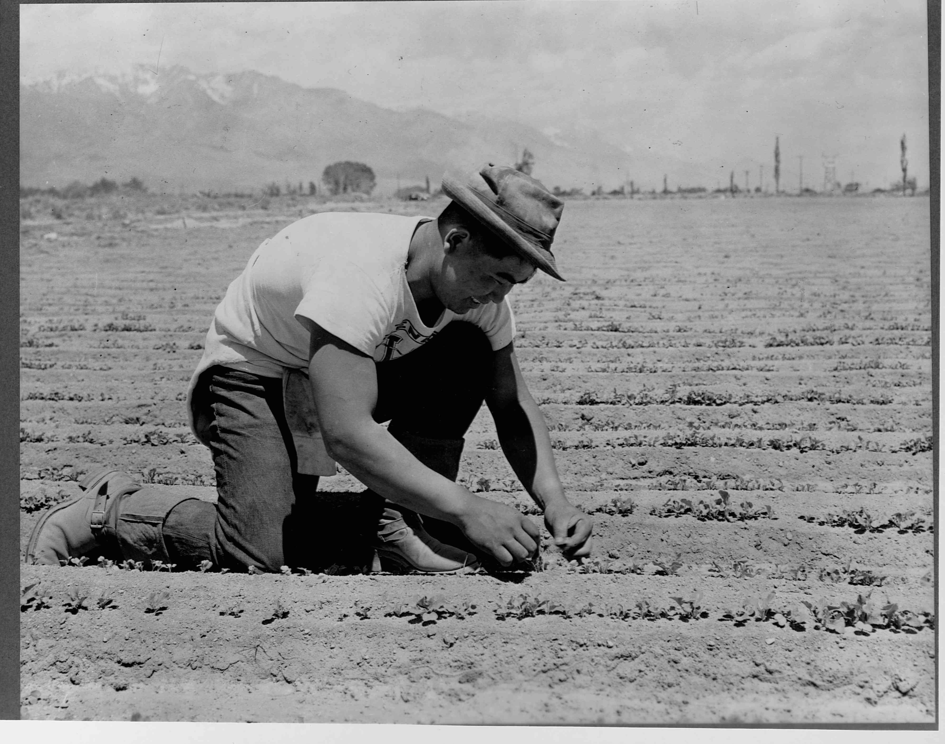 Ichiro Okumura Working in Field / Asian American Farming