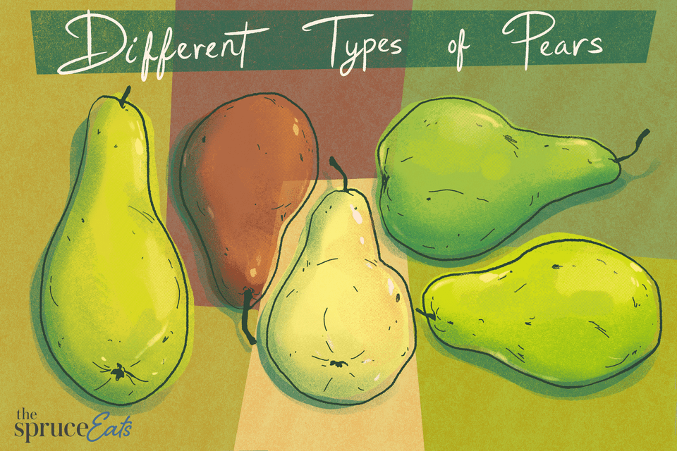 illustration showing different types of pears