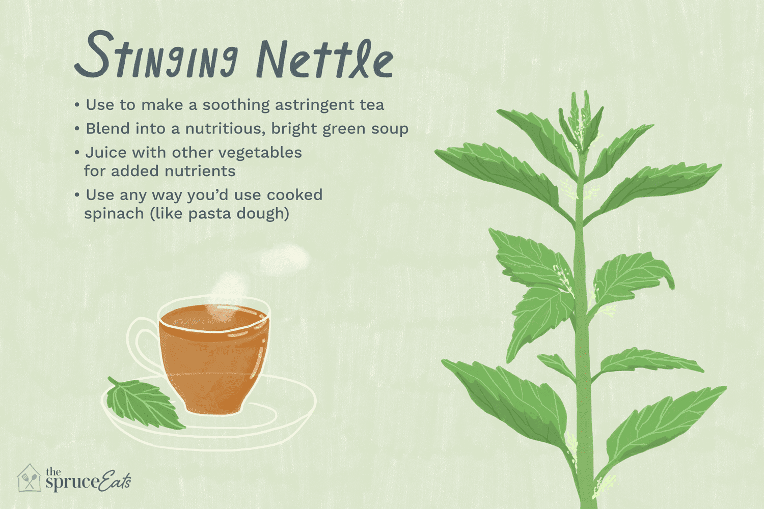 what is stinging nettle