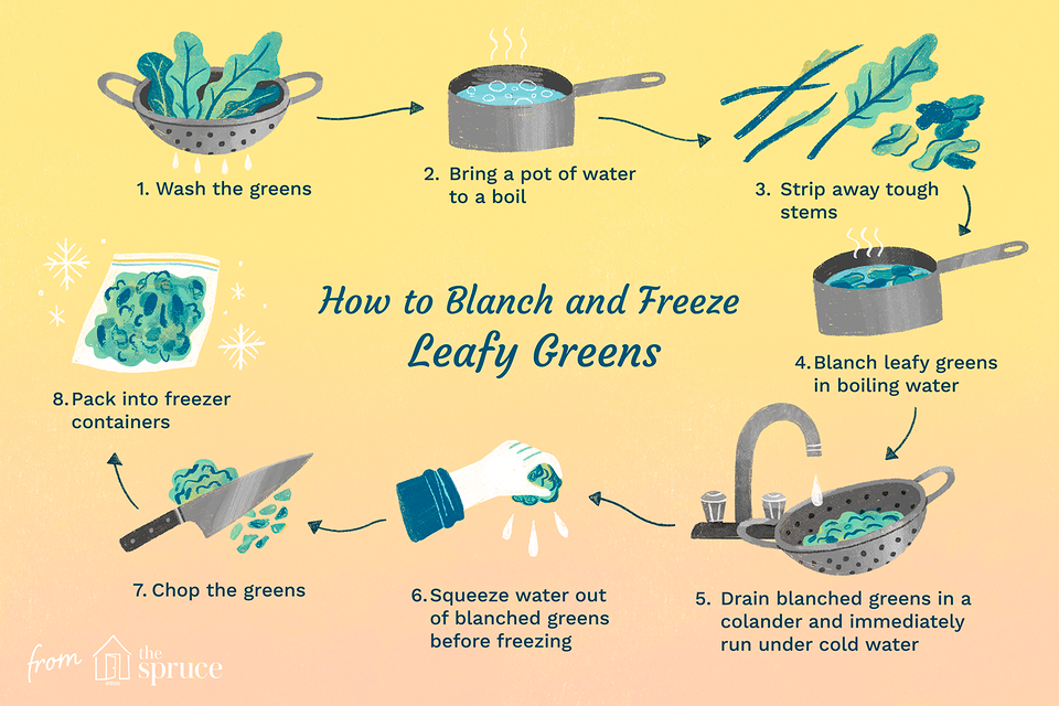 illustration with steps on how to blanch and freeze leafy greens