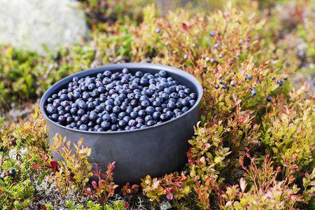 what are british bilberries