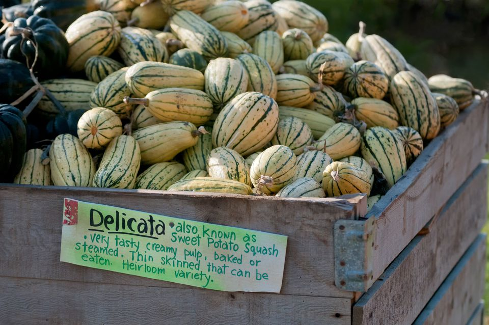 Delicata Squash at a Farm Market