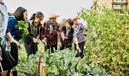 community garden / asian americans