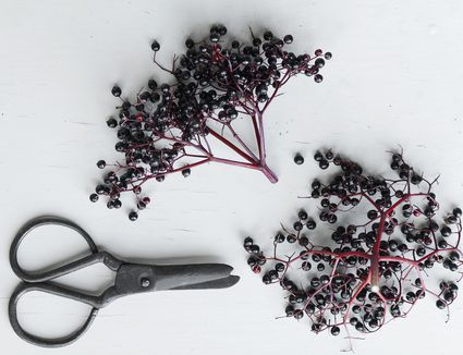 Elderberries on a tray