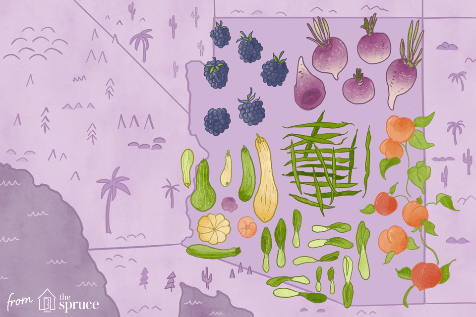 seasonal fruits and veggies of arizona