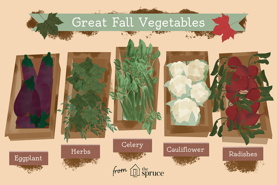 different types of fall vegetables