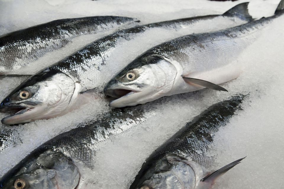 Fresh Salmon for Sale
