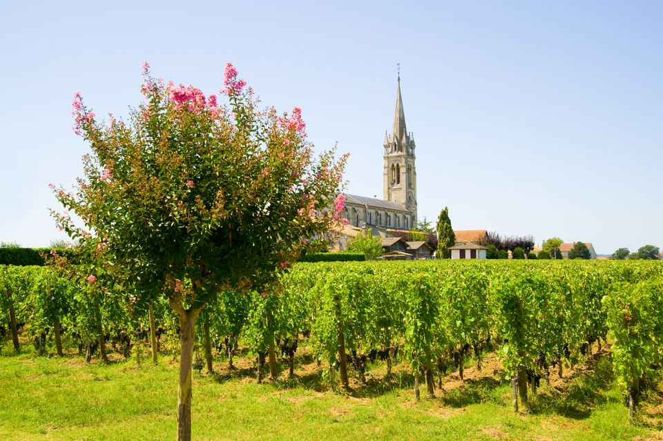 Vineyard, Pomerol, Aquitaine, France
