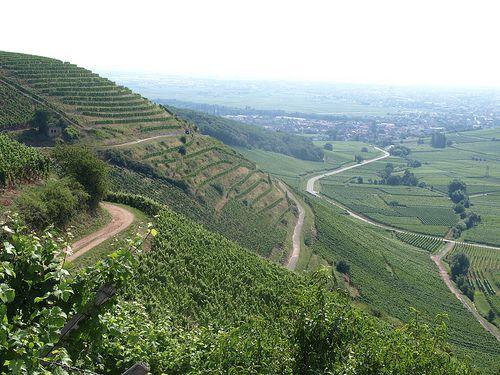 Vineyards in Alsace, France